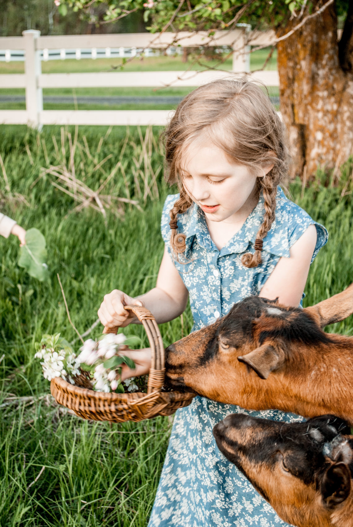 Why every homestead should include some friendly goats!
