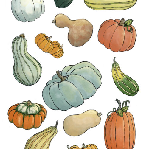 FREE download! Printable Pumpkin and Squash Stickers or Coloring page. FREE fall and autumn printable.